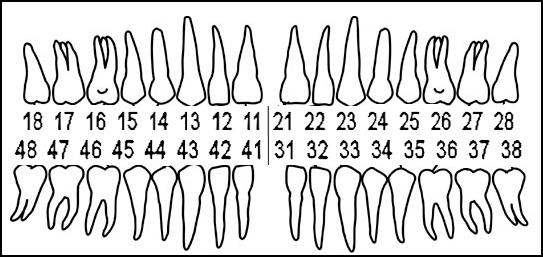 классическая нумерация зубов