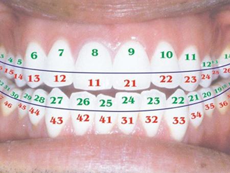 номерной порядок зубов