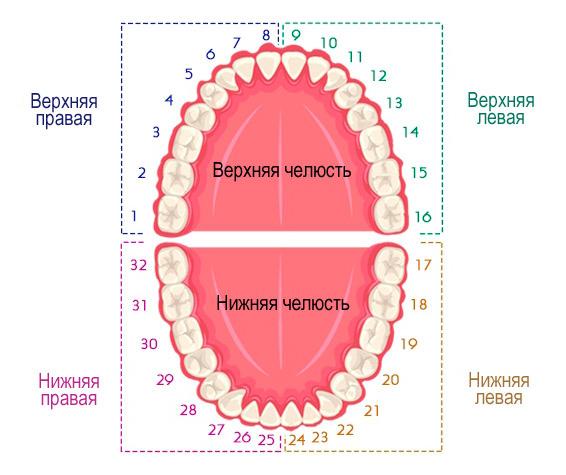 универсальная система нумерации зубов